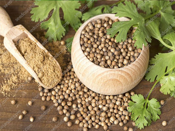 Buyer of coriander seeds