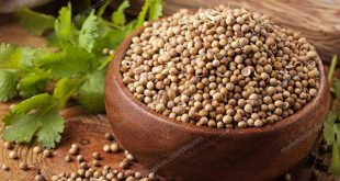 Wholesale Coriander Seed