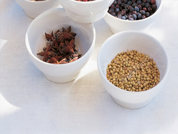 Coriander Seeds at Wholesale